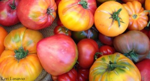KL_tomatoes500x270