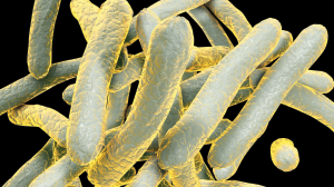 A 3D illustration of the bacterium, Mycobacterium tuberculosis.
