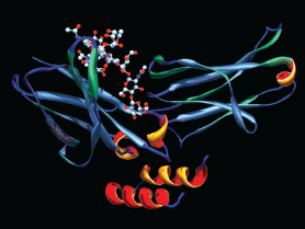 A computer model showing the secondary structure of the drug rituximab. The primary structure of an oligosaccharide (sugar), needed for the biologic activity of proteins, is at the upper left.