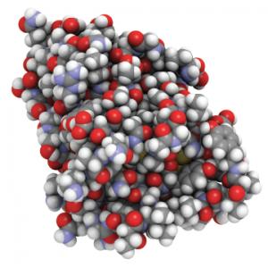 An all-atom representation of nanobodies—small antibodies found in camels, dromedaries and llamas.