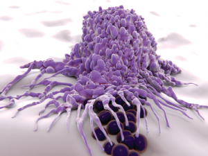 Macrophages engulf and digest cellular debris and pathogens.