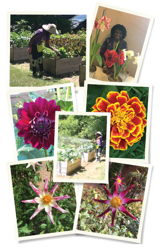Top Left: Dr.Desir harvests the fruits of her labor. Top Right: Dr.Desir, among her flowers. Middle: Dr.Desir waters her vegetable garden.