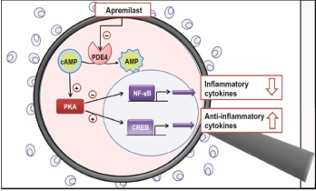 Figure 4: Proposed Mechanism of Apremilast