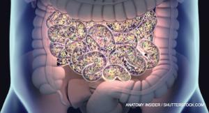 Anatomy Insider / shutterstock.com