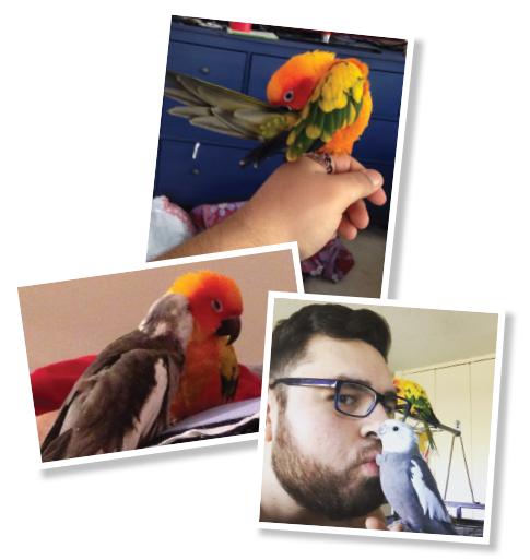Dr. Jonathan Paramo: Rheumatologist & Parrot Enthusiast