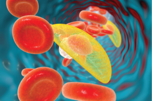 Toxoplasma gondii parasites in blood, the causative agent of toxoplasmosis disease, 3D illustration
