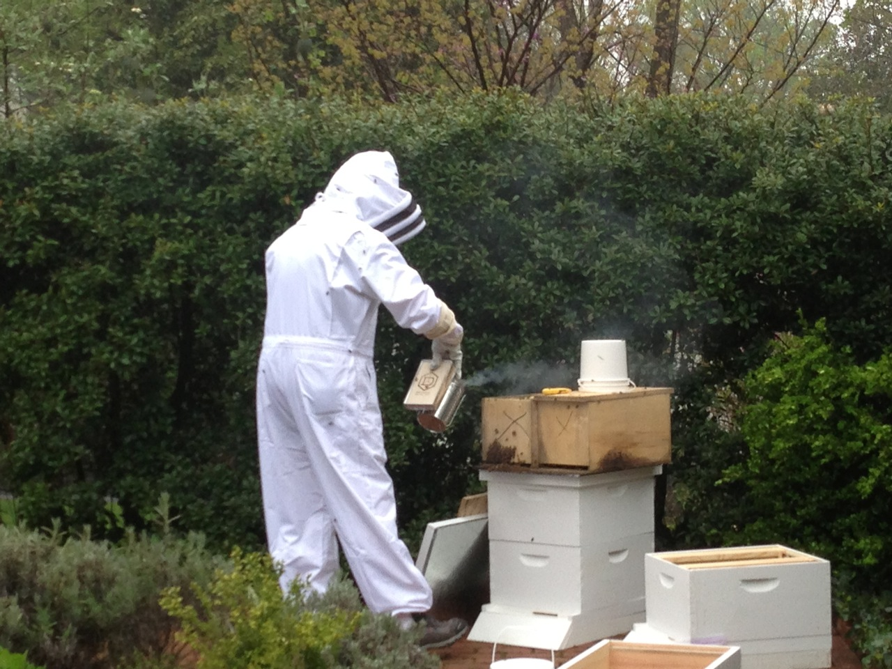 Dr. Brasington uses a smoker to calm the bees.