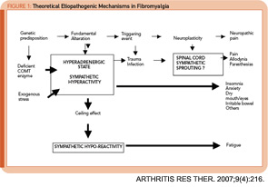 Figure 1: Theoretical Etiopathogenic Mechanisms in Fibromyalgia