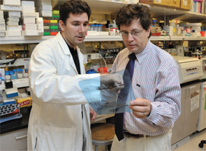 Dr. Siegel (right) in the lab, where breakthroughs in the treatment of autoimmune diseases have been made.