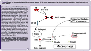 Figure 2: Role of the hemoglobin–haptoglobin scavenger receptor CD163, heme oxygenase, and ferritin in adaptation to oxidative stress induced by free heme and iron. Free heme is a source of redox-active iron.