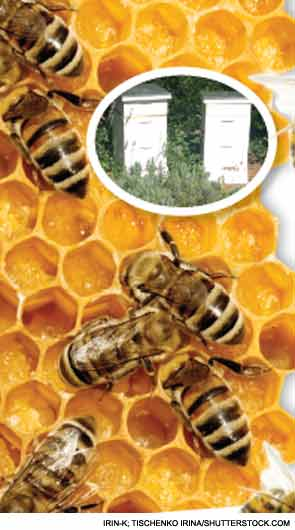 Rheum After 5: Physician Turns Beekeeper