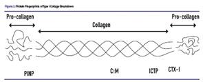 Protein Fingerprints of Type I Collage Breakdown